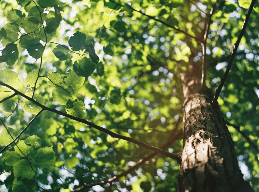 Blog_Tips_Umwelt
